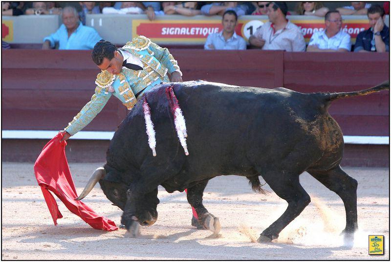 On doit à Ivan Fandiño les seules véroniques de la tarde. Face au second d'abord qu'il reçut ainsi près des planches, concluant sur belle demie, avant de le mener joliment vers le picador pour deux rations de fer, trasera la deuxième. Duel de quite ensuite entre les deux toreros, Juan Bautista intervenant par trois chicuelinas et revolera, Fandiño répliquant par trois véroniques, chicuelina et demie. Brindée au public, la faena aurait pu ne pas avoir lieu, Fandiño, après les premiers derechazos, chutant devant le mufle du bicho qui ne bougea heureusement pas. Ce « Vencedor » fut le seul à mettre correctement la tête dans la muleta sur la corne droite. Hélas ses charges templées bien trop courtes ne permirent pas au torero d'Orduña d'exploiter à fond ce merveilleux piton droit. Moins évidente fut la corne gauche, le Victorino ayant tendance à se retourner très vite. Deux pinchazos, avis, trois-quarts tendida complétée par trois descabellos. Salut au tiers.