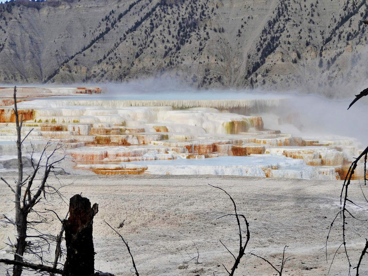 Yellowstone Canary Springs