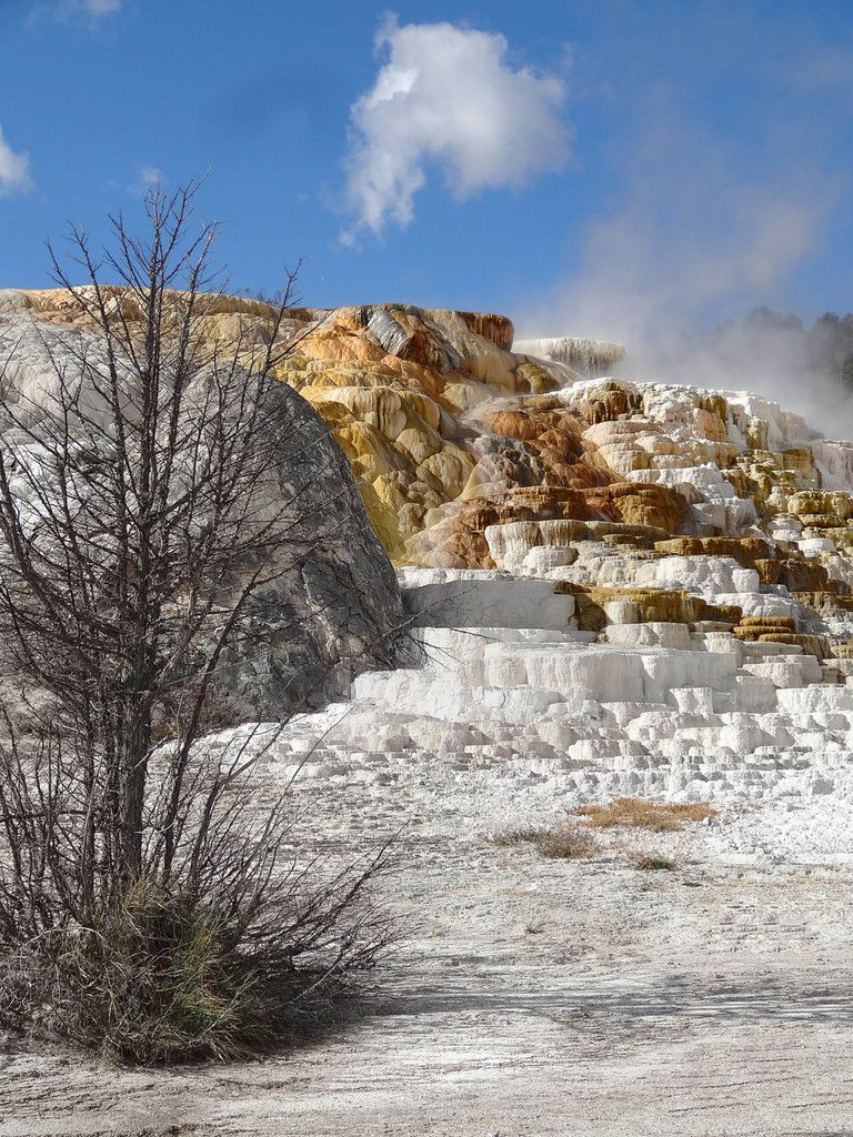 Yellowstone Palette Spring