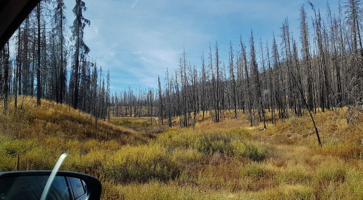 Yellowstone forêts incendiées
