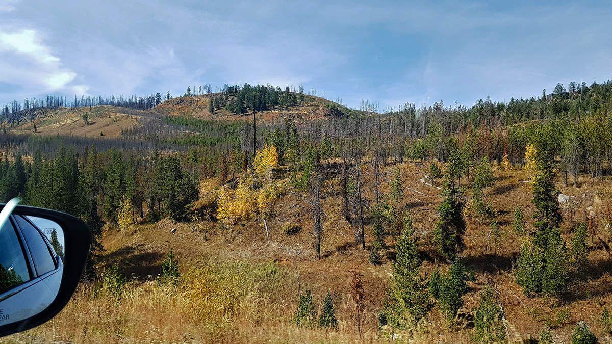 Yellowstone sud