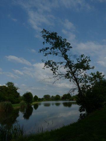 L'étang de pêche de Rou
