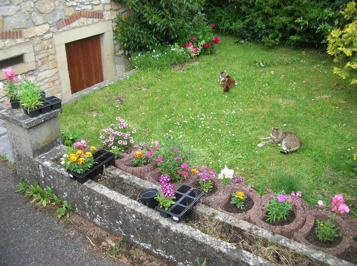 J'ai planté mes fleurs !
