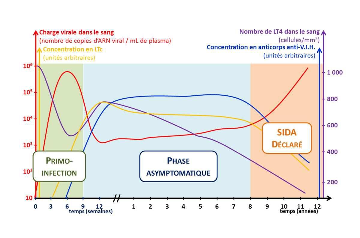 Graphique représentant l'évolution des protagonistes impliqués dans les réponses de l'organisme face à l'attaque par le V.I.H.