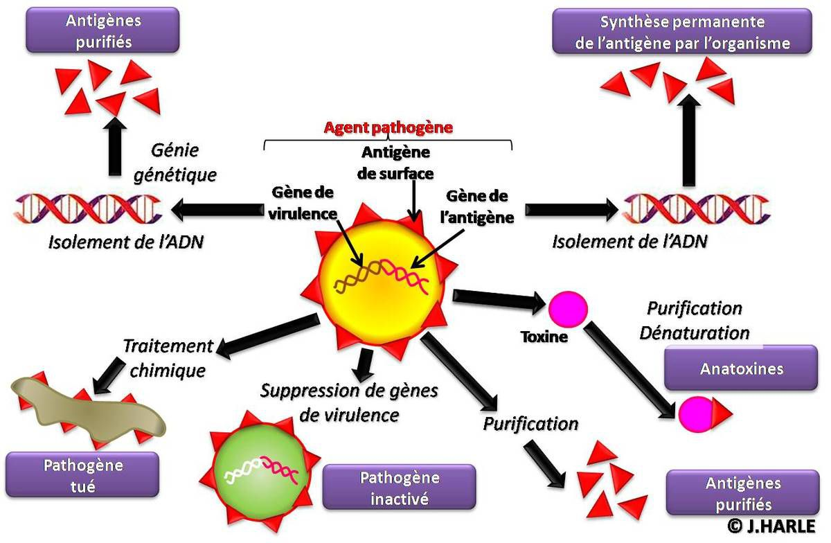 fabrication des vaccins