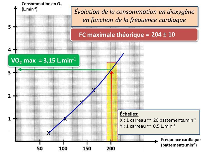 Estimation indirecte du VO2 max