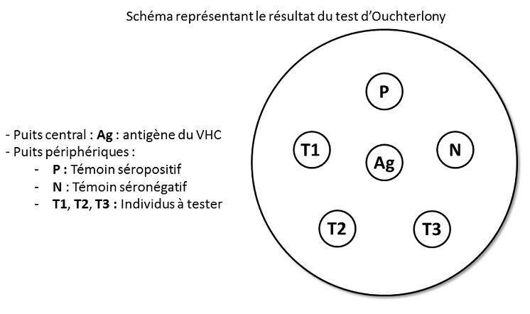 TS_TP La séropositivité au virus de l'hépatite C