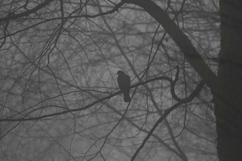 Pigeon colombin, pic mar, roitelet huppé, grimpereau des jardins