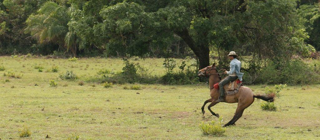 Les cavaliers du Pantanal aiment quand ça réagit vite...