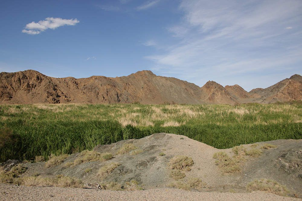 L'oasis de Sharl Khuls et ses peupliers du désert