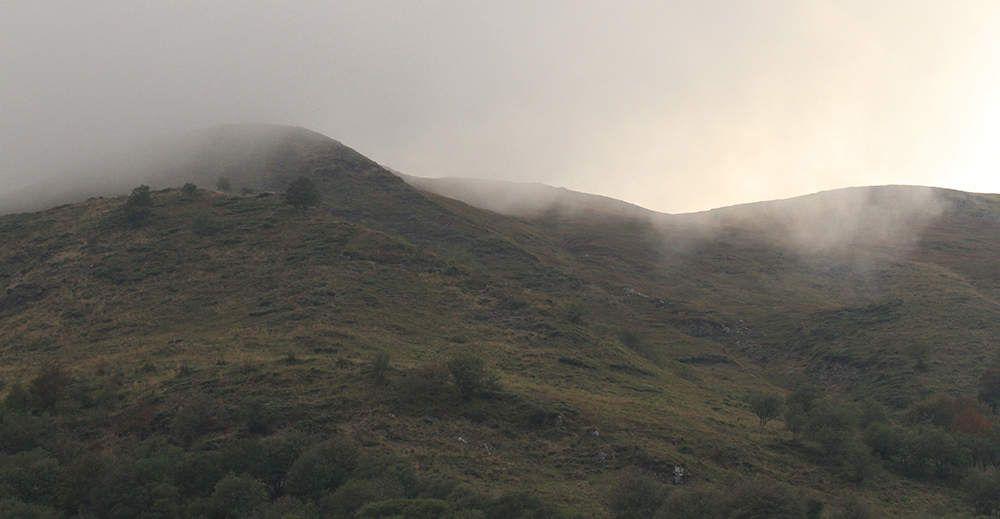 Le brame du cerf, le soir, dans la montagne