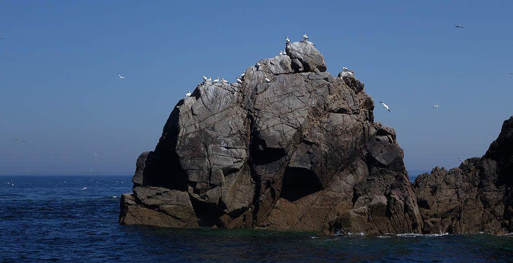 Un haut lieu de biodiversité bretonne : la réserve des Sept-Îles