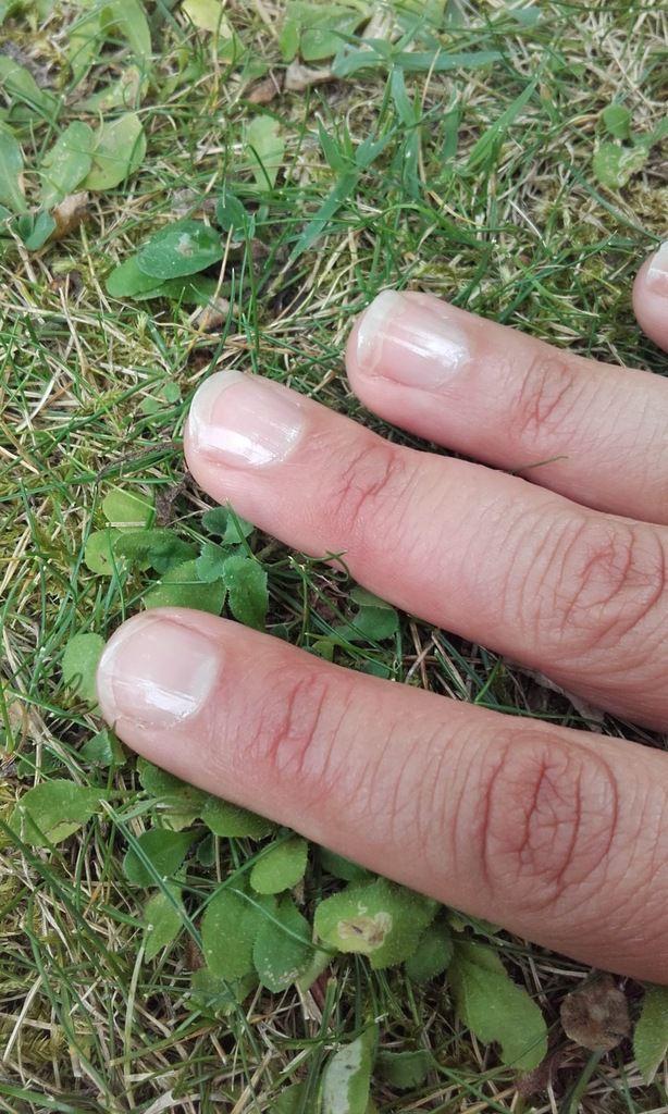 Test AZ : les vernis naturel