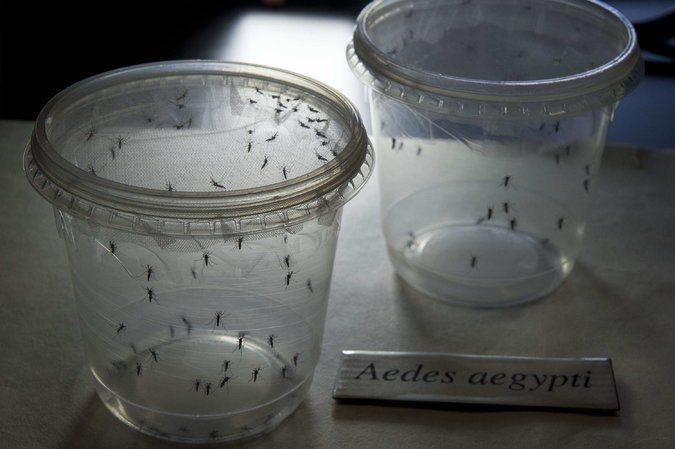 VIRUS  ZIKA: ¿OTRA ESTAFA GIGANTESCA