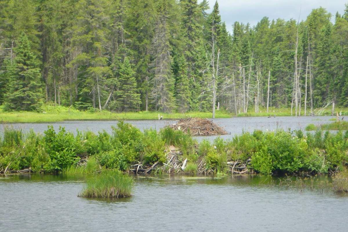 Canada : Celui qui cherchait l'orignal