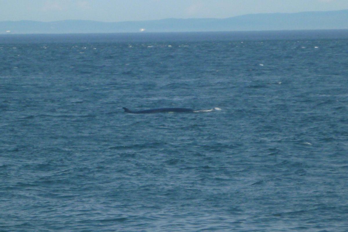 Canada : Celui qui observait les baleines
