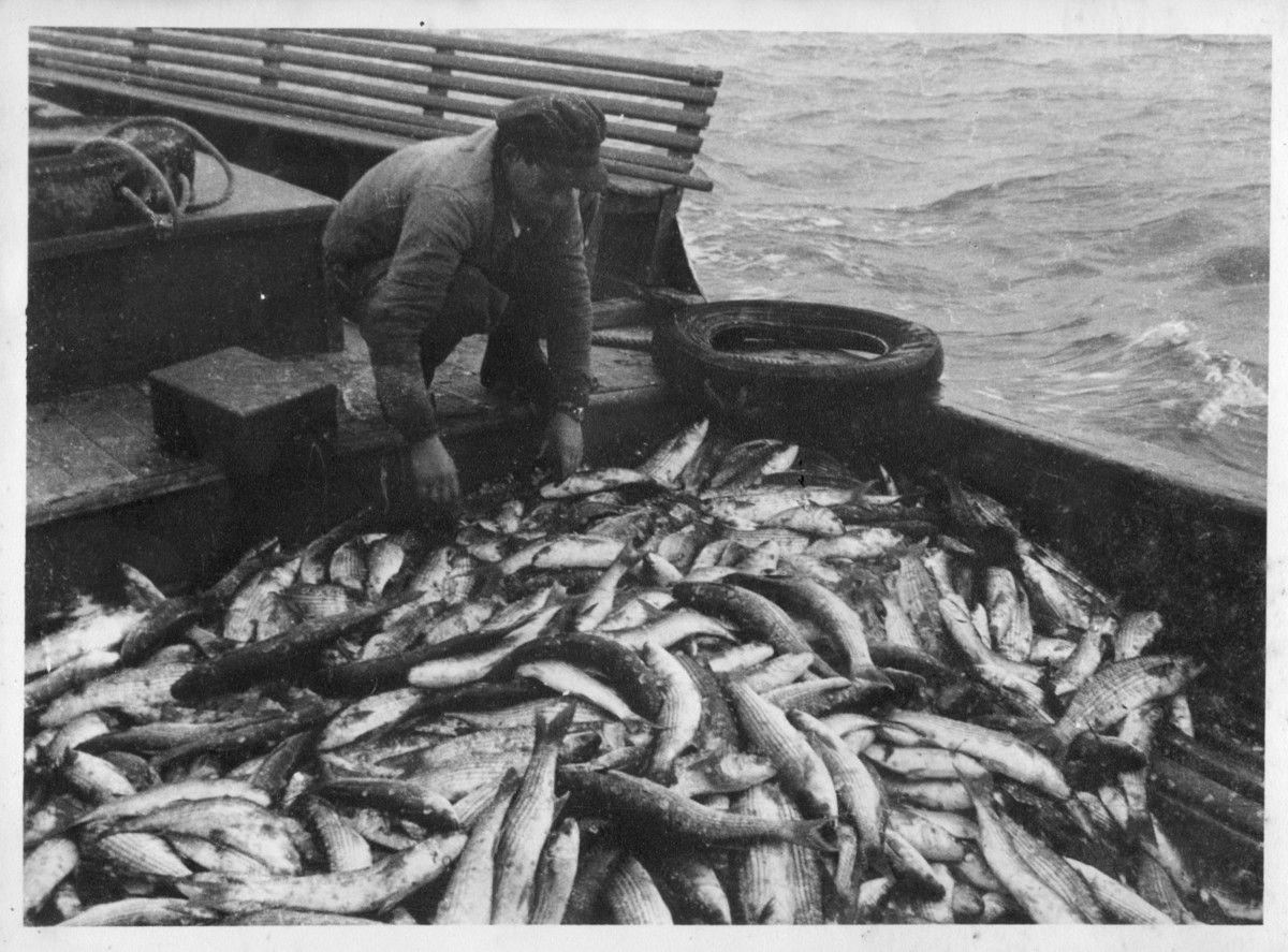 Georges en 1951 sur le St Christophe dont la cale est emplie de mulets...Il faut savoir qu'en hiver,les bateaux de passage et leurs équipages étaient occupés en pêche, notamment...