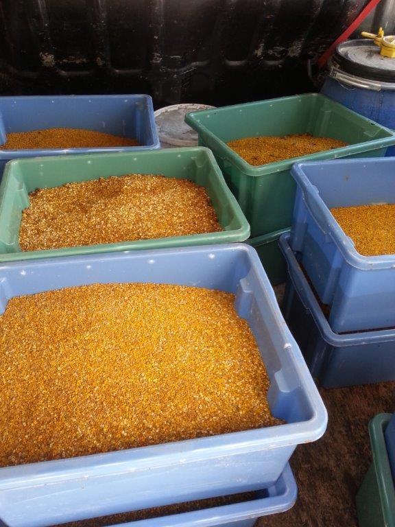 Récolte pollen de fruitier sauvage 2017