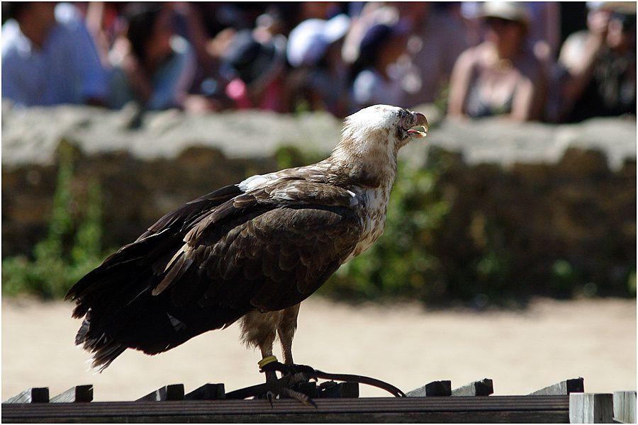 Le Puy du Fou - Août 2013 - Le Bal des Oiseaux Fantômes