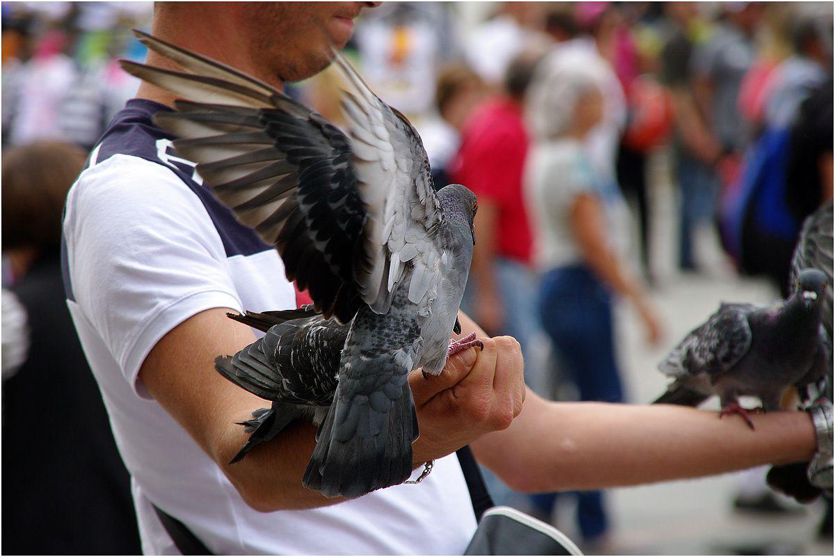 Venise en photos - septembre 2013 - Palais des Doges - les pigeons