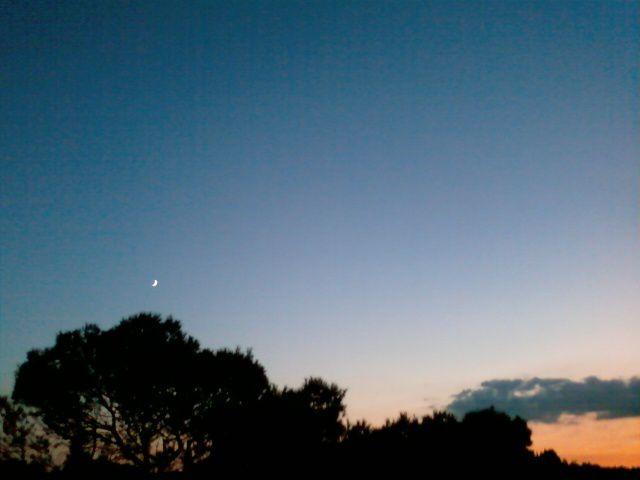 La lune sur le pin...