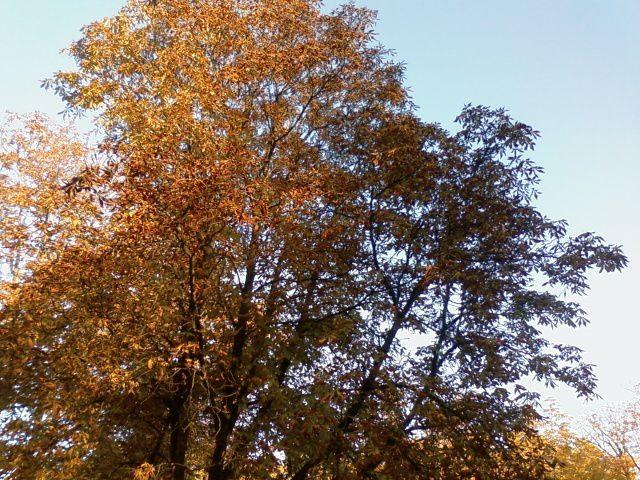 L'automne est là, flamboyant et superbe !