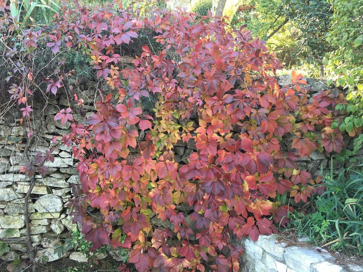 Toutes les couleurs de l'automne...