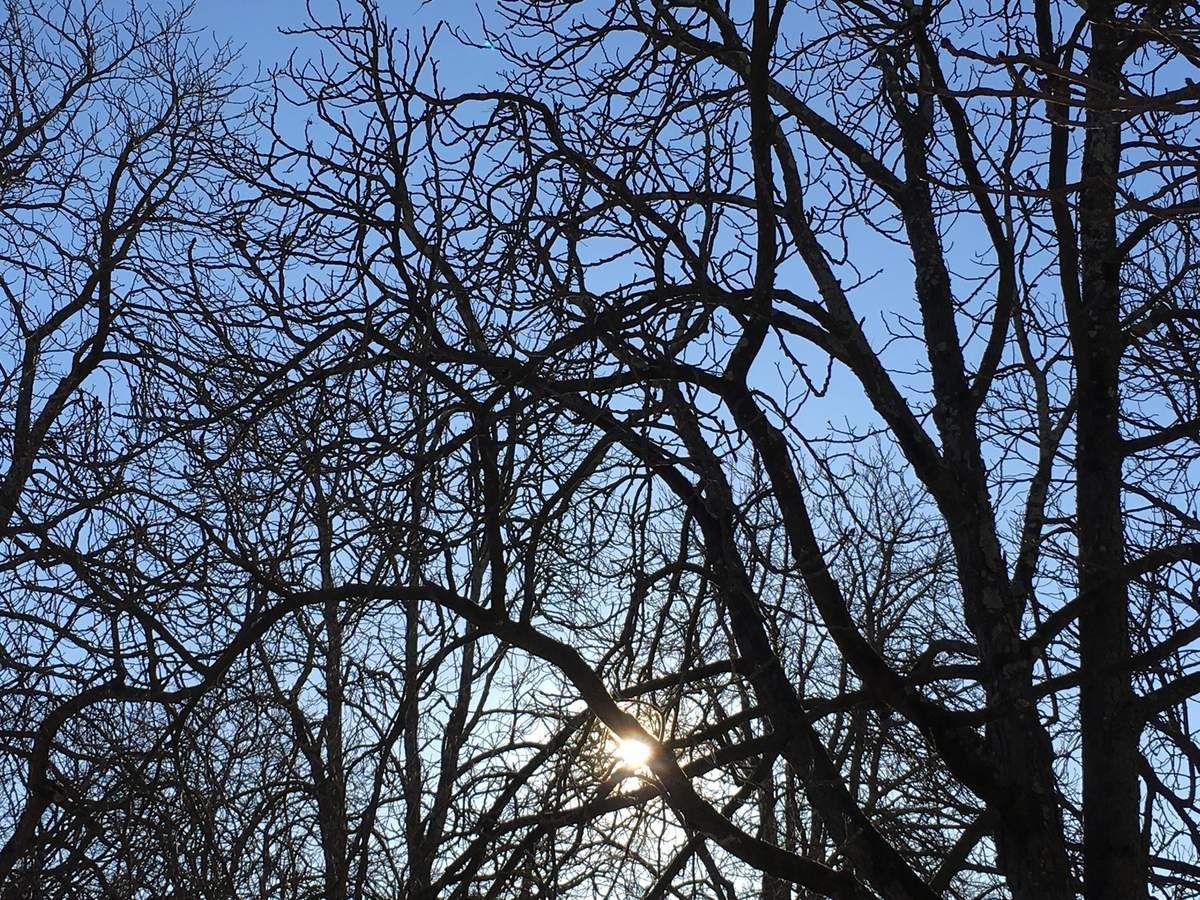 Soleil et arbre d'hiver...