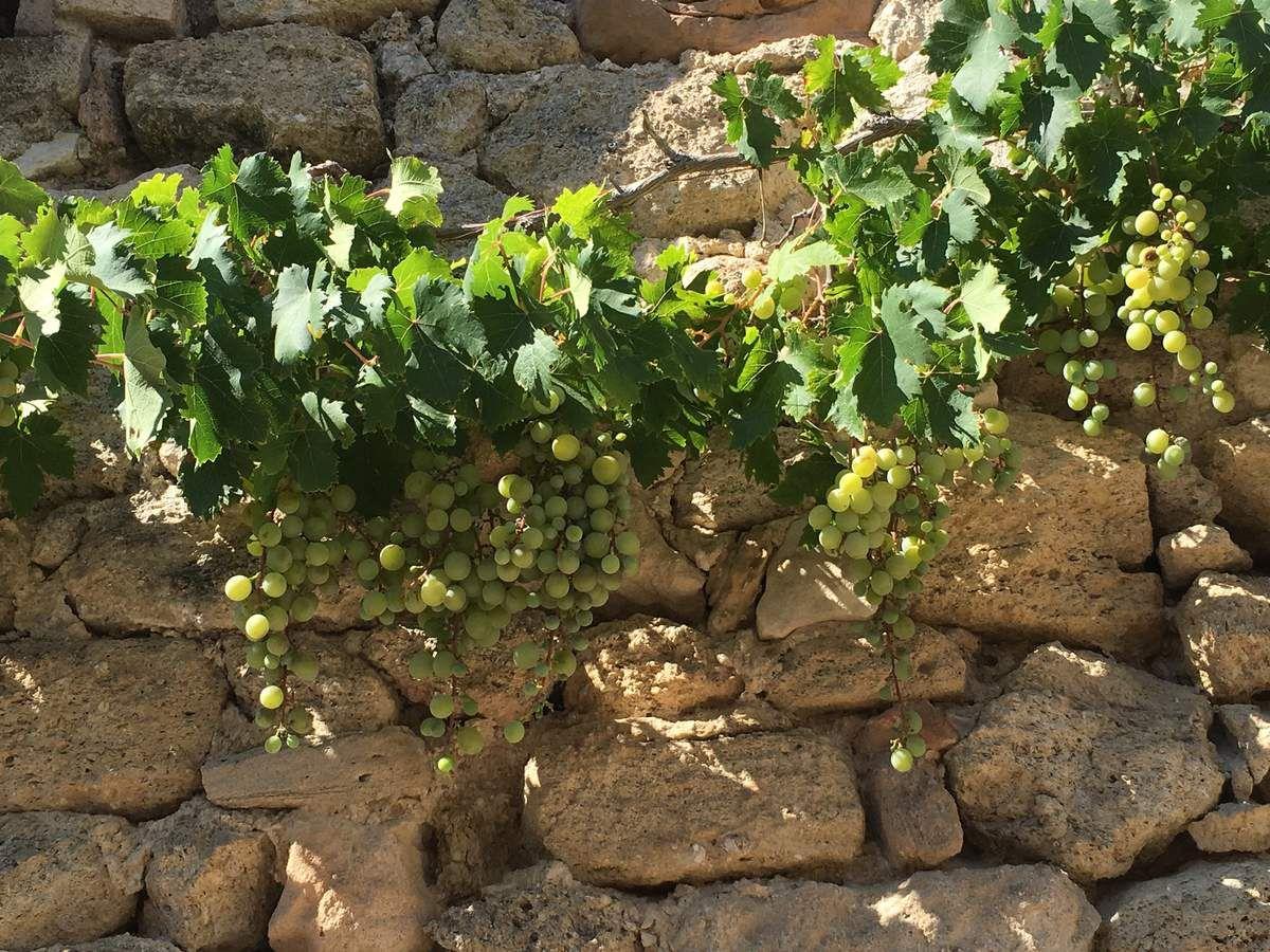 Ménerbes, village provençal...