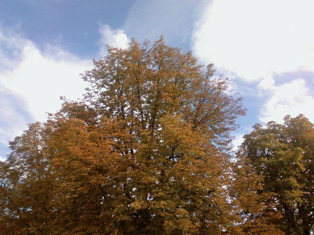 C'est le moment de lire Teintes d'automne de Thoreau...