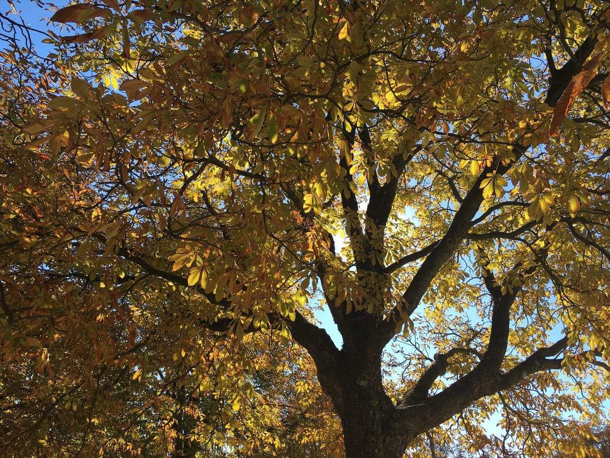 Lumières d'automne...