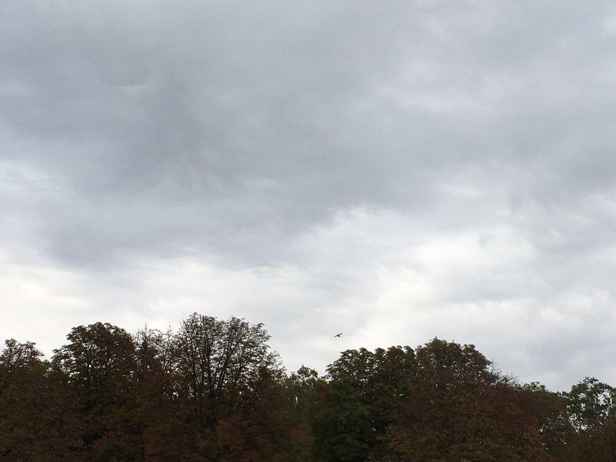 Vents d'automne...