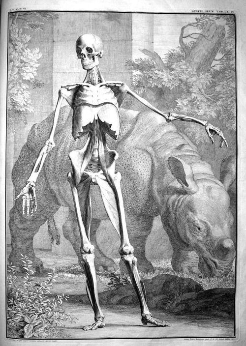 jan wandelaar (in Bernardhus Siegfried Albinus), dessin d'après Nature