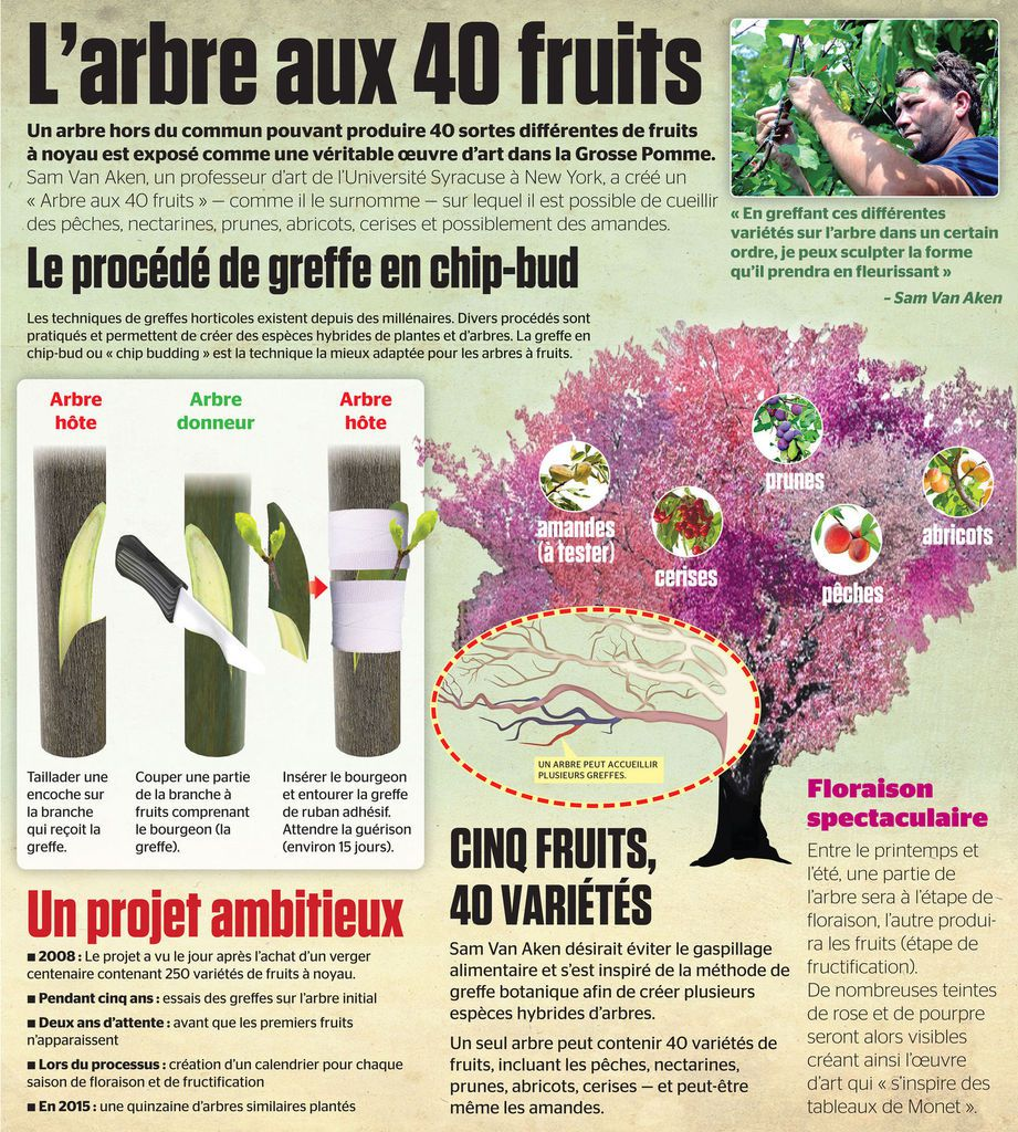 L'arbre aux 40 fruits...