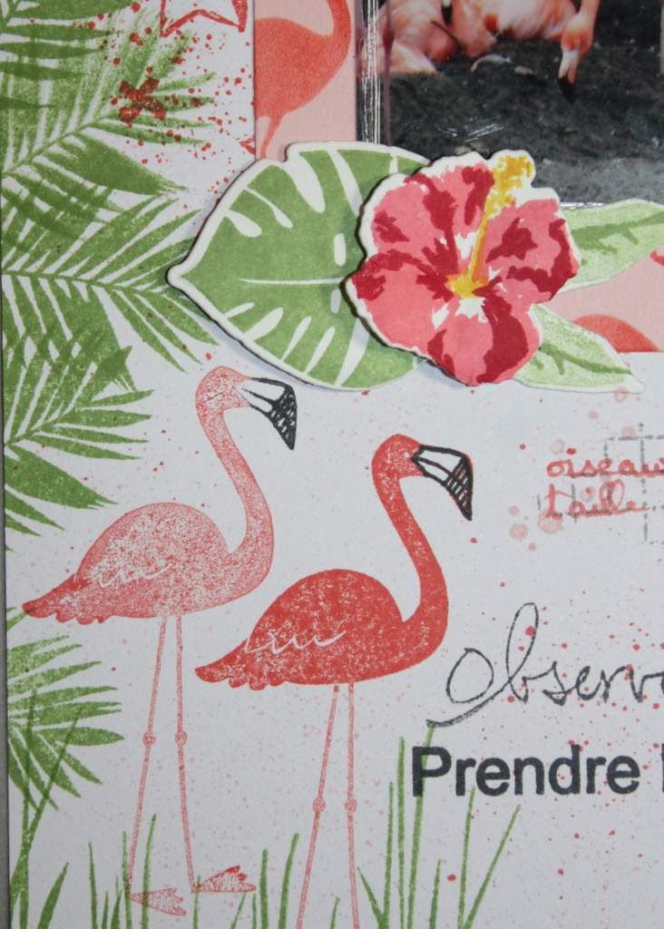 Page Fabuleux flamants