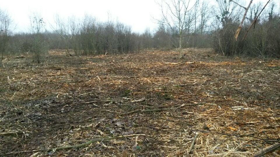 Zone de compensation écologique dans le bois de la Base de loisirs de Vaires