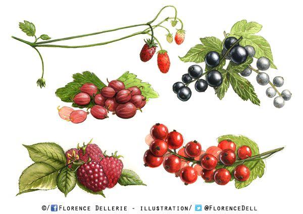 Illustration : fruits à l'aquarelle