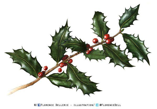Illustration botanique à l'aquarelle : branche de houx