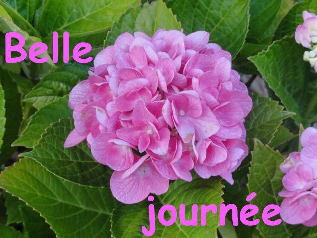 Madame la Fée - Un P'tit Tour au Jardin #2