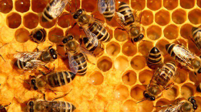 cire d 39 abeille cire naturelle peintures naturelles. Black Bedroom Furniture Sets. Home Design Ideas