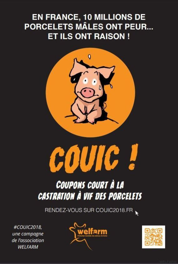 Couic !