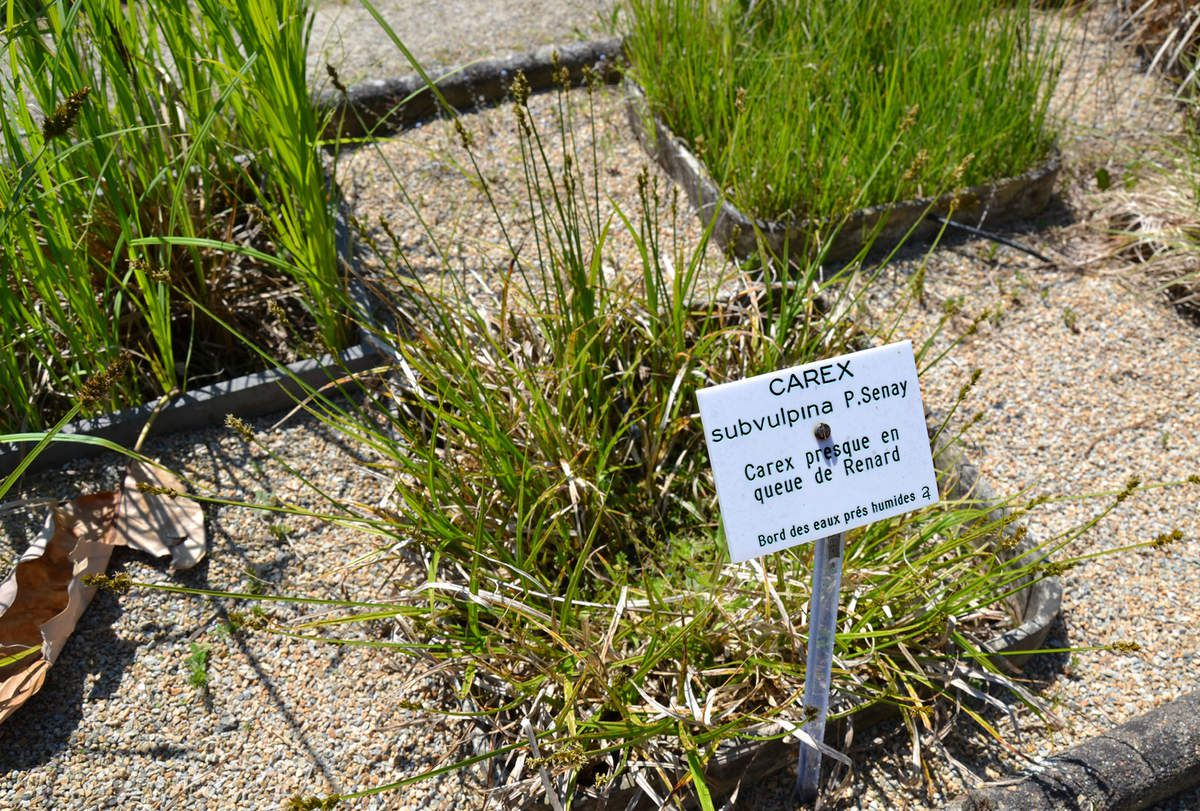 Chemin des jours for Au jardin des plantes chambery