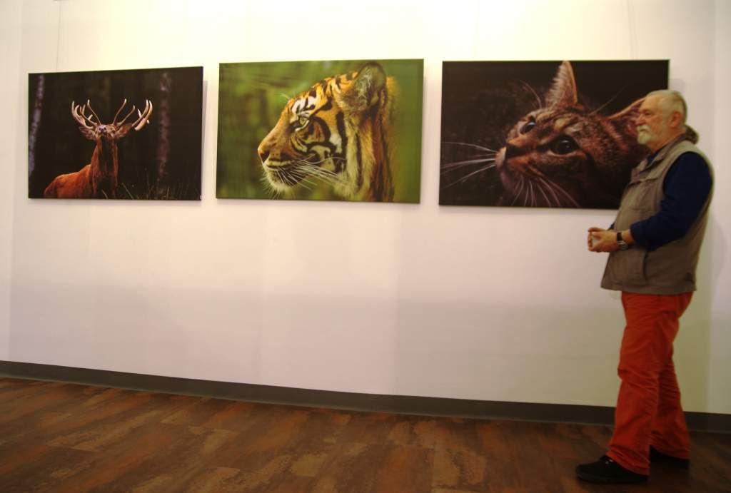 Les oeuvres photographiques animalière de Ray