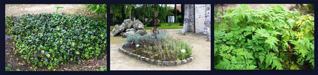 Le jardin botanique qui regroupe les plantes médicinales cultivées depuis très longtemps