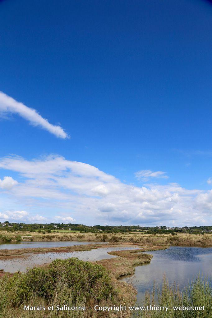 Marais salants et salicorne  - Presqu'Ile Guérandaise