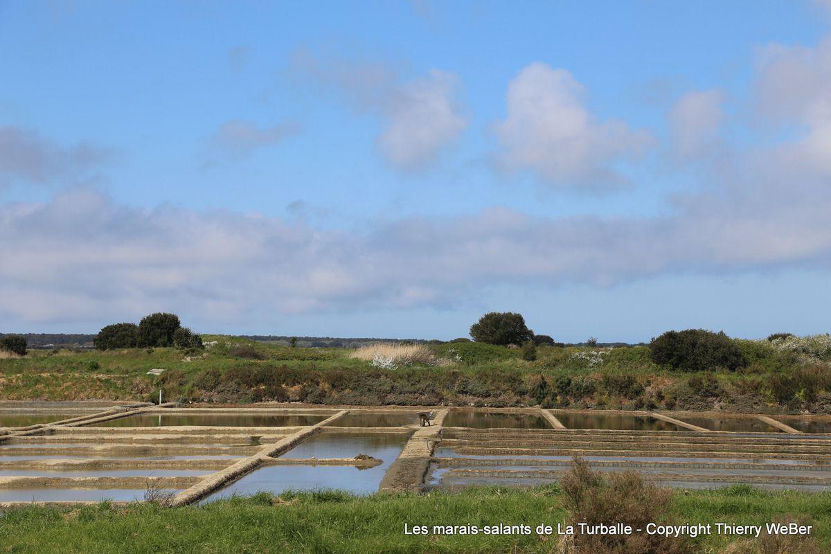 Journée douce dans les marais-salants de la Presqu'Ile Guérandaise
