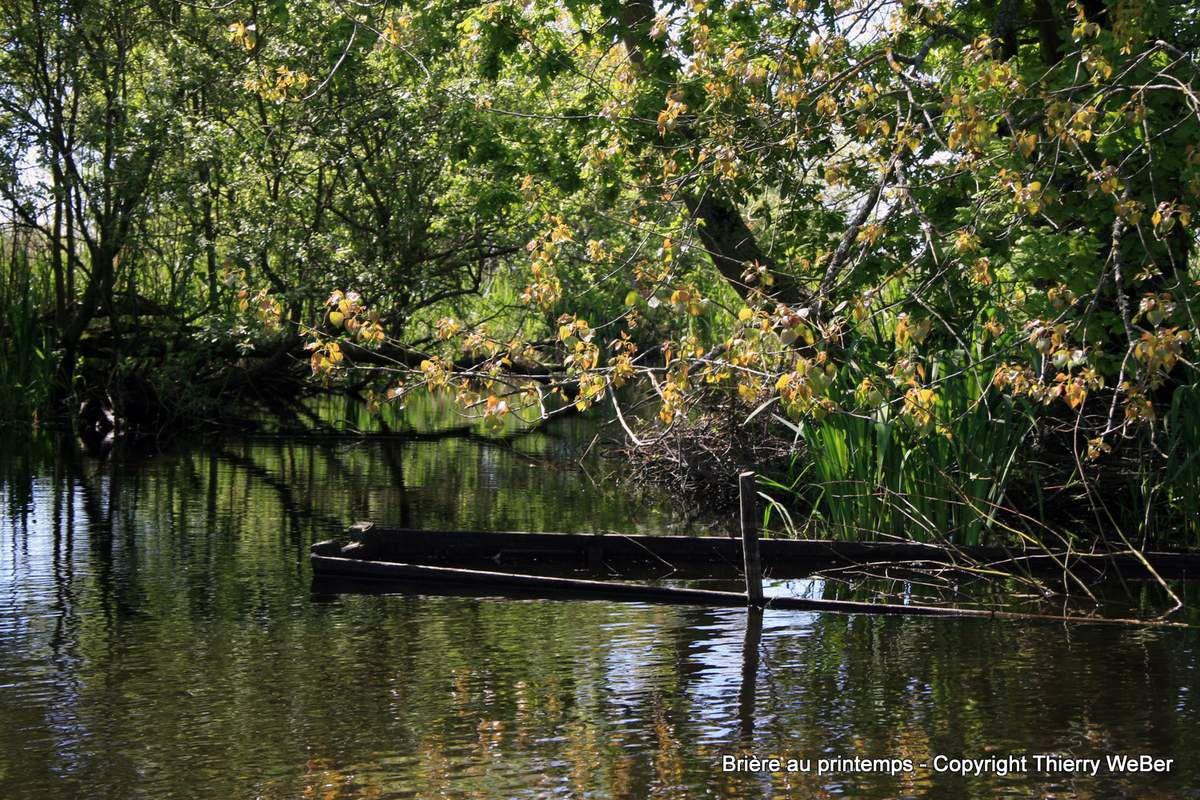 Promenade au coeur des marais de Brière au printemps