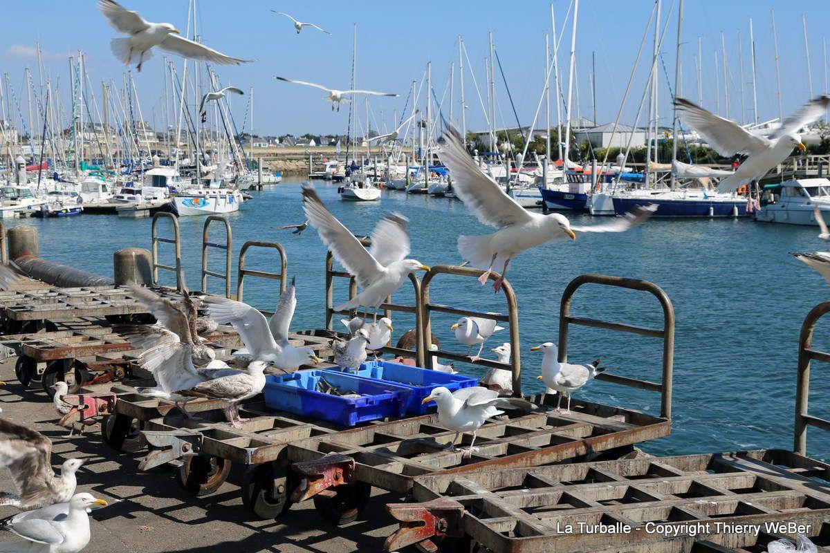 Après-midi paisible dans le port de La Turballe