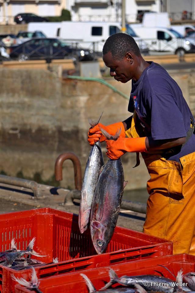 Retour de pêche au thon Germon
