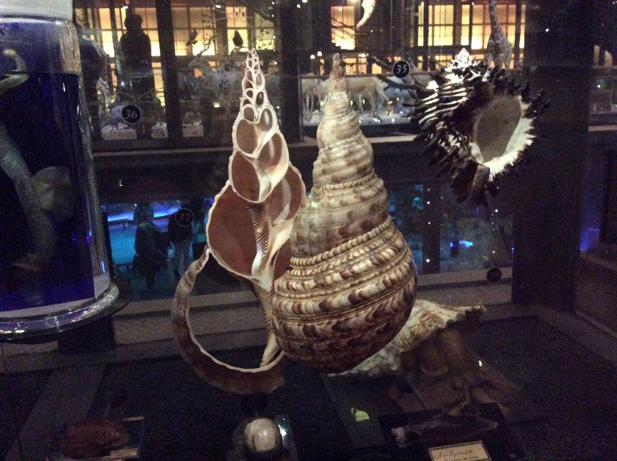 Grande Galerie de l'évolution. Au jardin des plantes de Paris. Tous les j. 10h à 17h.
